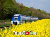 Train Colza